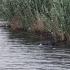Cadavrul unui bărbat a fost găsit plutind pe Canalul Dunăre-Marea Neagră
