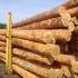 Proiect de lege pentru interzicerea exportului de buşteni din România
