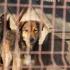 ONG-urile nu au soluții pentru câinii maidanezi, ci amenințări și acuze