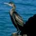 S-a confirmat! Gripă aviară în Portul Constanța!