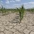 Agricultorii, cu ochii spre cer. Seceta va face ravagii și în 2016?
