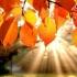 Octombrie 2019, cea mai caldă lună octombrie înregistrată vreodată