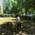 Angajații Primăriei iau spațiile verzi la puricat. Vezi zonele vizate!