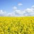 Care sunt cele mai bănoase culturi agricole ale României