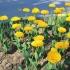 Atenție! Se fură flori de pe domeniul public din Constanța