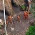 Au masacrat şi tranşat o parte a unui trib izolat şi s-au lăudat cu asta!