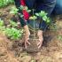 Bani pentru păduri de la APIA! Mai aveţi timp până pe 17 noiembrie