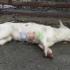 Câine împușcat mortal în Constanța!