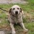 Câinele polițist Cora, spaima traficanților de droguri