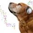 Câinii vor să asculte reggae și soft rock