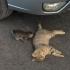 Câini și pisici omorâți la Valu lui Traian! Masacrul, un fleac pentru primar!