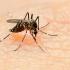 Carantină pentru stoparea răspândirii virusului Zika?