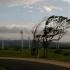 Cod galben de vânt puternic în Dobrogea
