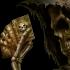 Colțul Troll-ului - Până și Morții i s-a majorat salariul...