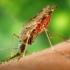 Constănțenii au lansat o petiție... anti-țânțari
