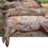 ALERTĂ! În două localități din Tulcea, Pestă Porcină Africană! Vezi detalii!