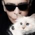 Celebrul Karl Lagerfeld şi a sa Choupette - o legendă ce nu se va stinge niciodată