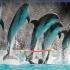 Surpriză de proporții la Delfinariu! Șase delfini vor face senzație!