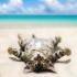 Ce temperaturi maxime se anunță pe litoral!!!