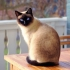Ce vârstă are pisica ta în ani omenești?