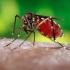 Informații noi în privința implicării virusului Zika în cazurile de microcefalie