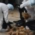 OMS cere raportarea rapidă a cazurilor de gripă aviară