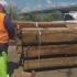 Patru containere pline cu bușteni au fost oprite în Portul Constanța