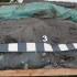 Percheziții la braconieri! Polițiștii au confiscat sute de kilograme de pește!