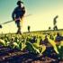 Problema extrem de complexă a zilierilor din agricultură! Ce spune LAPAR