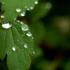 Prognoza ANM: Vreme caldă şi multe ploi