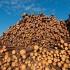 Războiul lemnului între SUA şi Canada. Trump spune că nu se teme