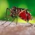 Reuniune de urgenţă a OMS în cazul virusului Zika