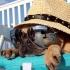 Se anunță vreme extrem de călduroasă pe litoral. Vezi când!