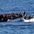 Traficanţi de migranţi, prinşi de Garda de Coastă din Constanţa