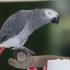 Un papagal, printre cumpărătorii de pe Amazon