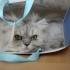 Veniți să vedeți peste 250 de pisici din toate colțurile lumii!