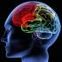 22 iulie - Ziua Mondială a Creierului!