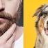 Descoperire incredibilă: Blana unui câine, mai curată decât barba unui bărbat!