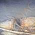 Epavele a trei corăbii au fost descoperite în Marea Neagră