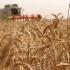 Exporturile de cereale au crescut cu aproape 16%