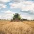 Fermierii dobrogeni, grav afectați de secetă