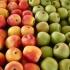 Fermierii români aruncă fructele la animale, pentru că nu au spaţiu de depozitare