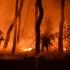 Incendii în Grecia: Aerul a devenit aproape irespirabil la Atena
