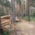 Imagini dezolante: Zeci de copaci tăiaţi, într-o zonă declarată centru de carantină. Cum se apără proprietarii pădurii