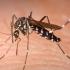 Încă un deces din cauza virusului West Nile