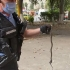 Intervenție a jandarmilor pentru îndepărtarea unui şarpe