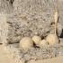 Crescătorii de ovine pot valorifica lâna în 20 centre de colectare