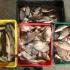 Voiau să comercializeze 100 kg peşte fără documente legale, dar au fost prinși