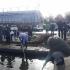Acțiune amplă de igienizare a lacului Tăbăcărie, ca umare a imaginilor cu lebedelor care înotau printre gunoaie