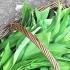 Verdețuri de primăvară: Leurda și efectele sale miraculoase